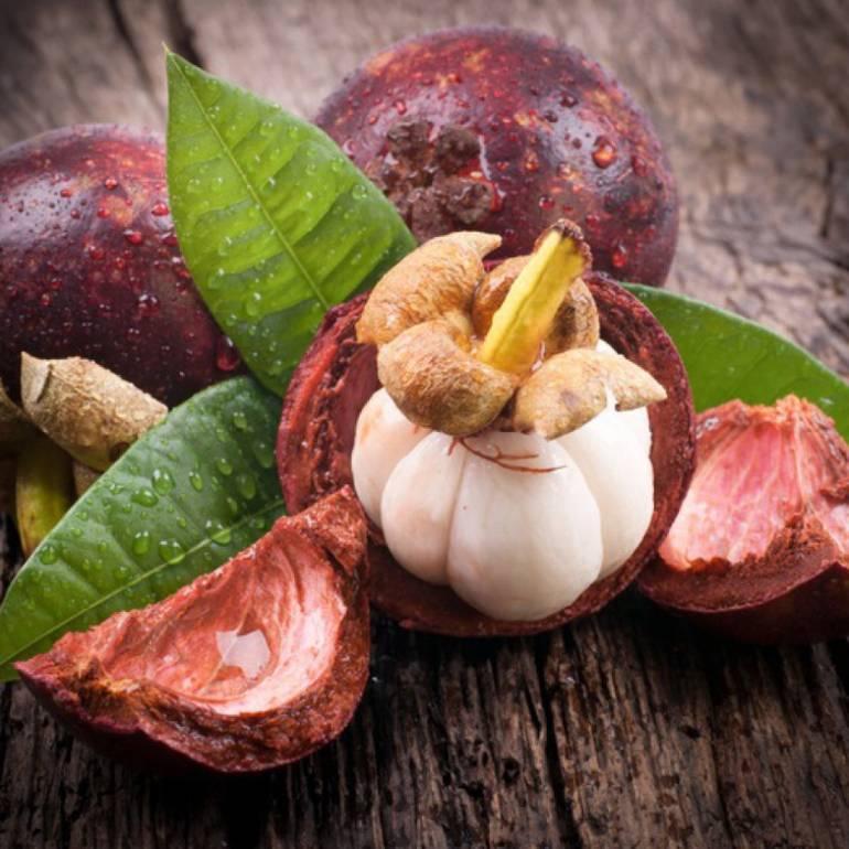Мангостин – польза и вред тропического фрукта