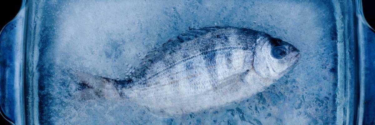 Подводные камни в разморозке рыбы