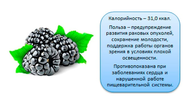 Ежевика: польза и вред. какие витамины содержатся в ягодах?
