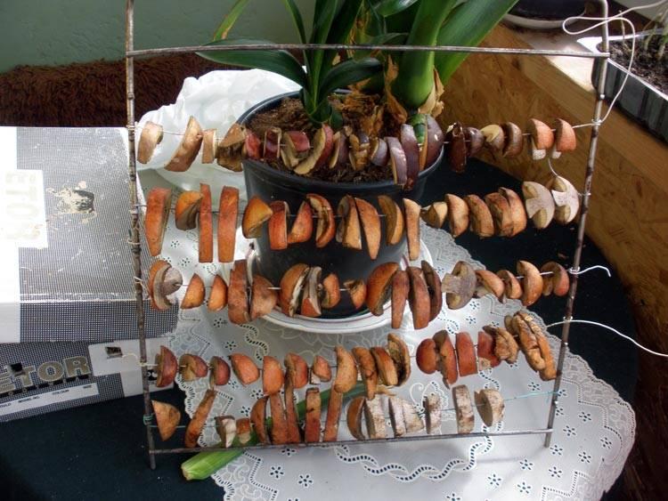 Как сушить белые грибы на зиму в домашних условиях