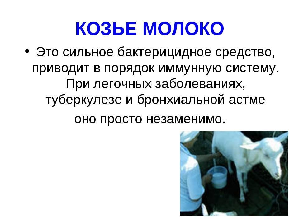 Козье молоко: польза и вред — для детей, мужчин, женщин, беременных. польза и вред козьего молока для организма при заболеваниях печени, гастрите, диабете