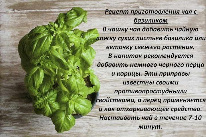 Базилик: состав, польза и вред, применение в кулинарии и лечебных целях, рецепты