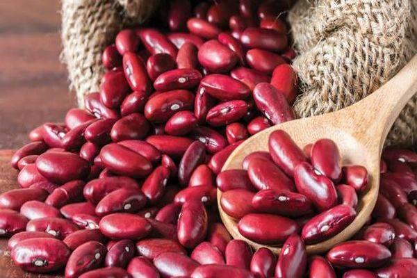 В чем польза и вред красной фасоли для здоровья