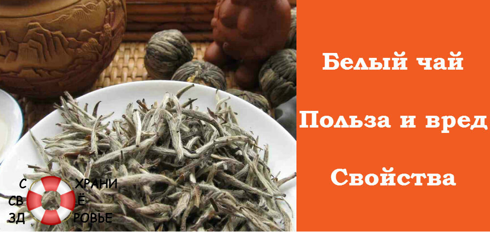Полезные свойства белого чая и противопоказания