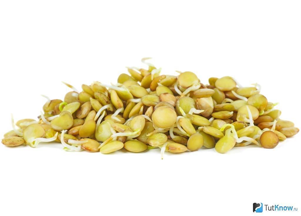 Чечевица: польза и вред для организма мужчин и женщин, при похудении, рецепты приготовления