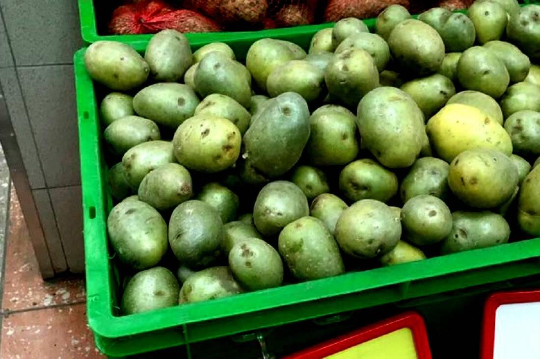 Можно ли есть немного позеленевшую картошку