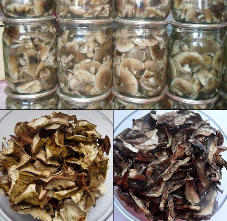 Как хранить сушеные грибы в домашних условиях?