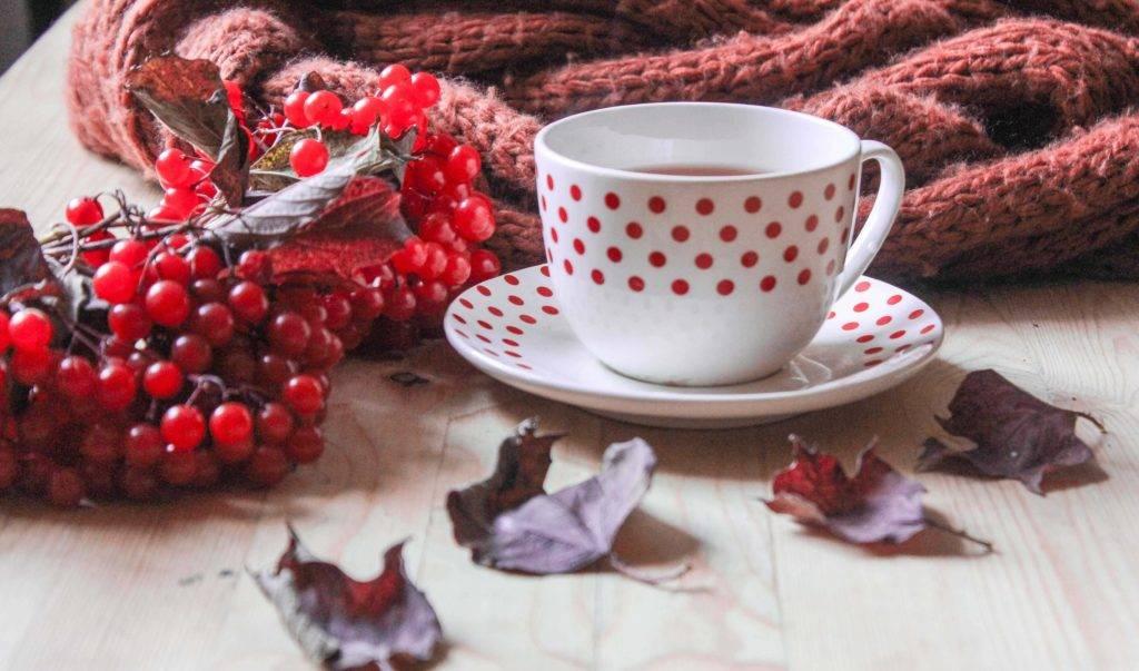 Ягода калина: польза и вред для здоровья