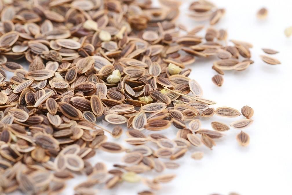 Чем полезны семена укропа