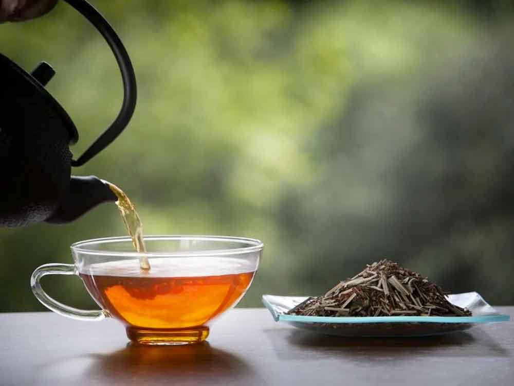 Чай ройбуш – свойства и противопоказания