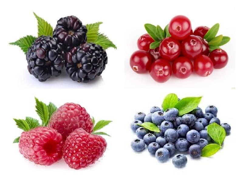 Какие ягоды наиболее полезны для печени — топ 7 самых лучших