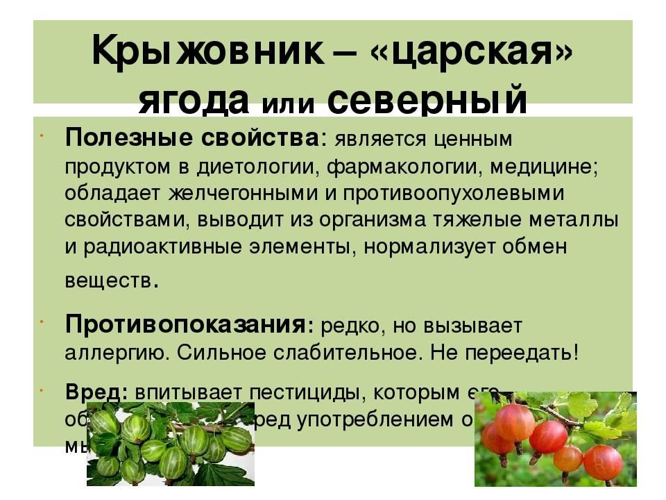 Крыжовник польза и вред для здоровья: полезные свойства для организма и описание содержимого ягоды (115 фото + видео)