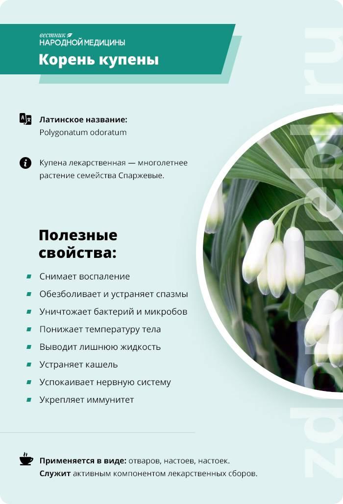Использование растения купена