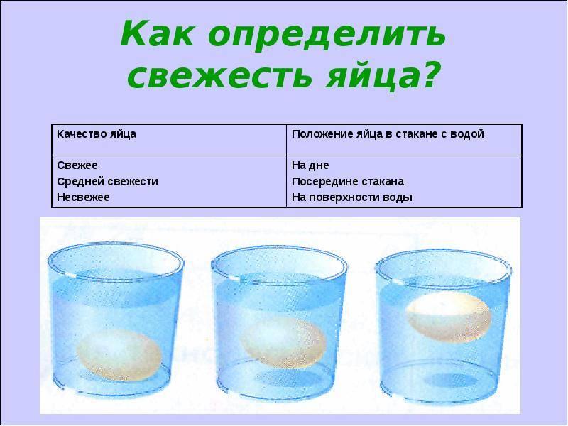 Учимся проверять яйца на свежесть: самые эффективные методы