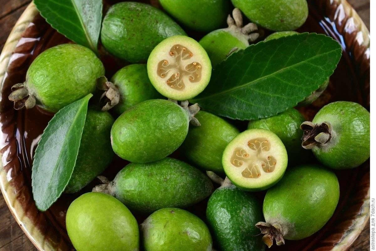 Гранадилла фрукт – что это за плод и как его правильно едят