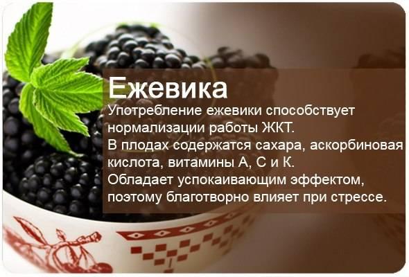 Ежевика польза и вред для здоровья человека
