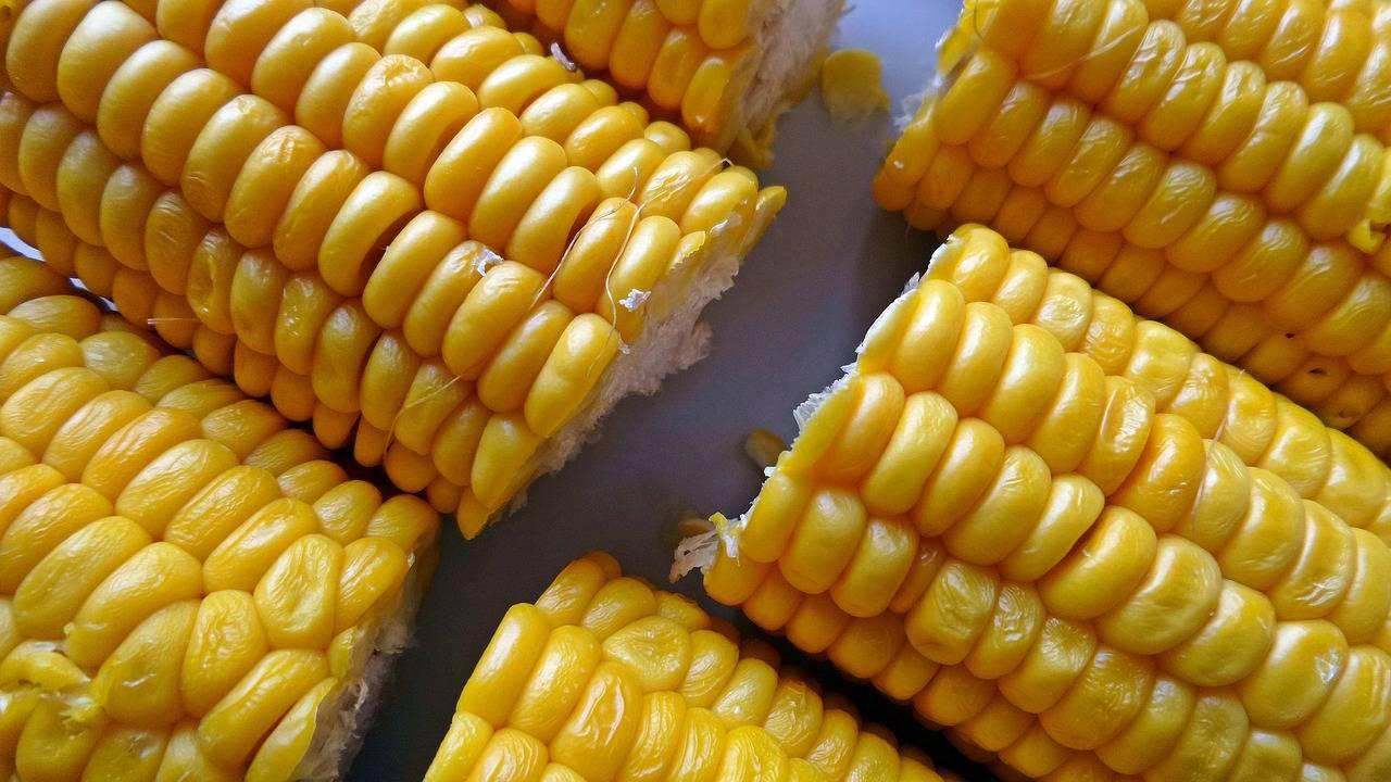 Чем полезна царица полей — кукуруза?