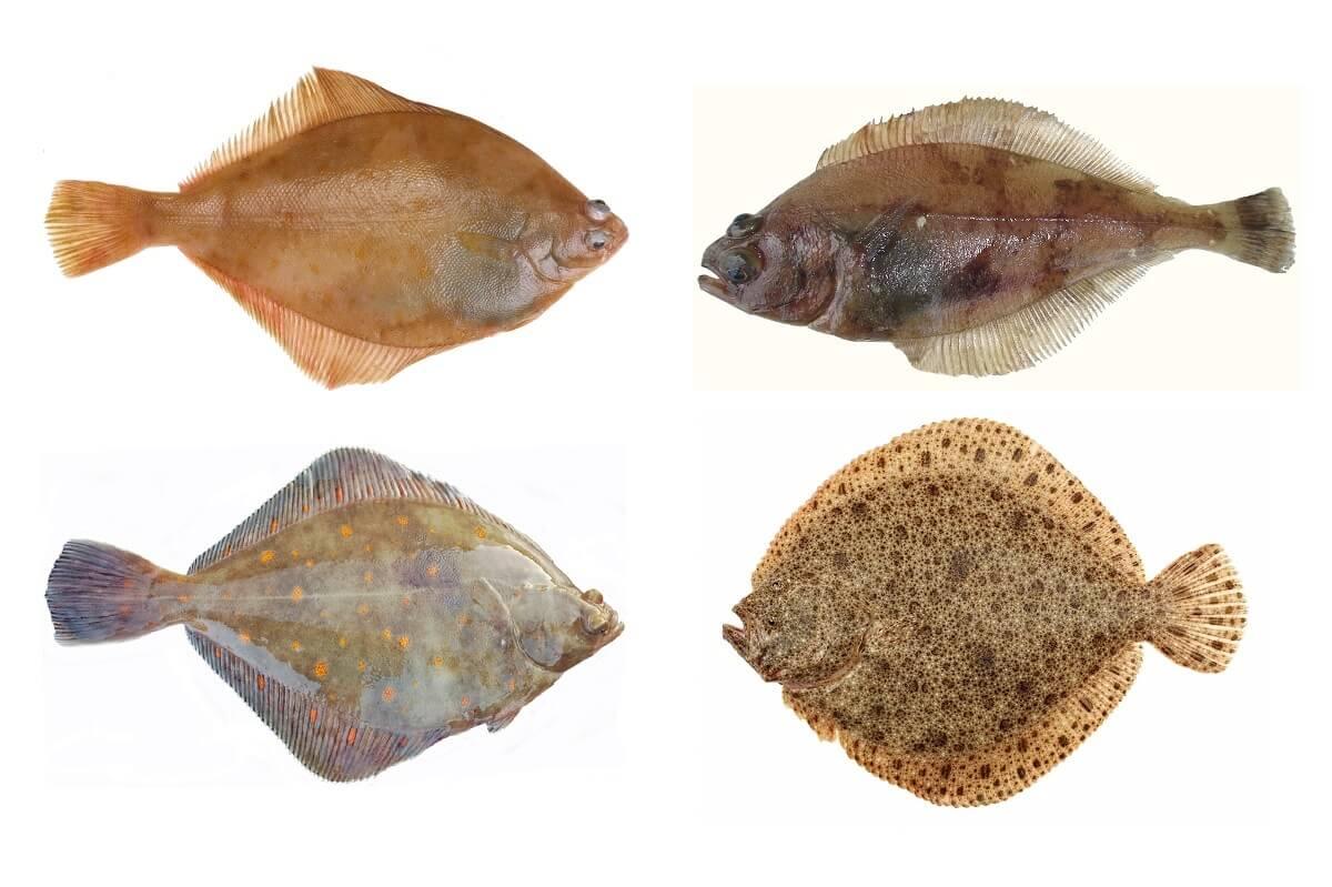 Ценный дар моря камбала — польза и значение в диетическом питании. как выбрать и вкусно приготовить камбалу