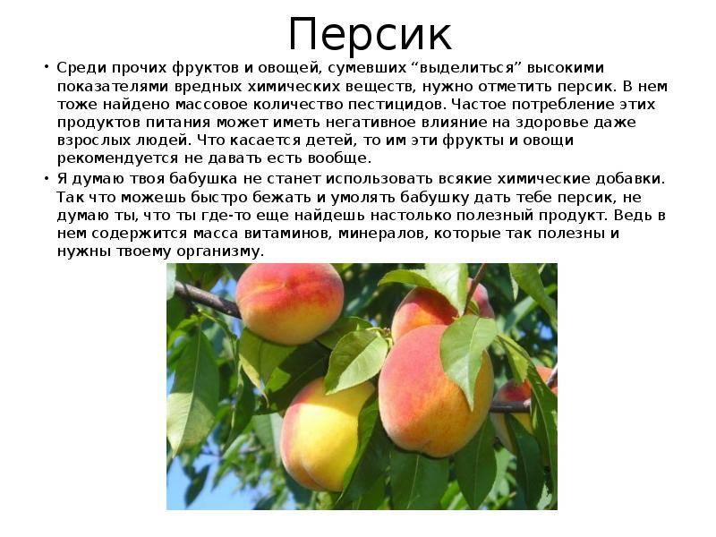 Персики - польза и вред для здоровья, применение при диетах и в косметике