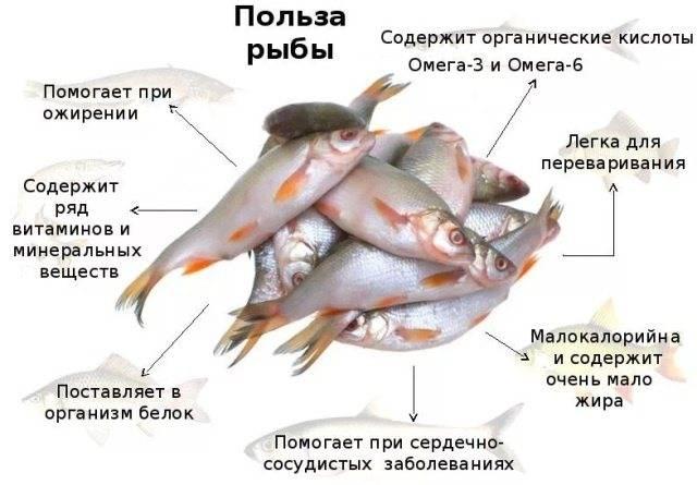 Самая полезная рыба для женщин