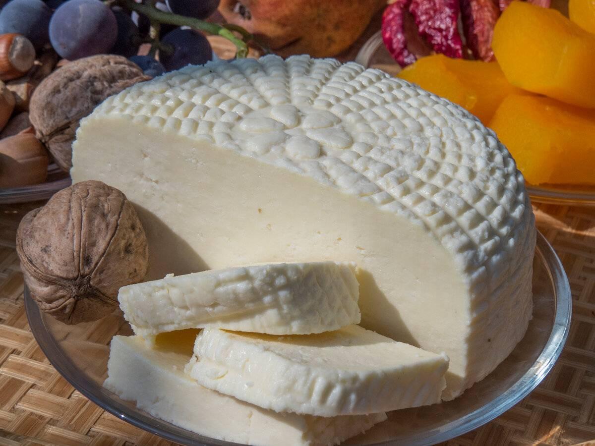 Адыгейский сыр: польза и вред, особенности применения