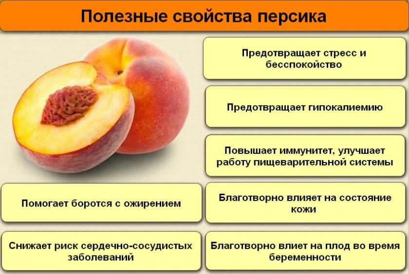 Персики польза и вред для здоровья организма человека: советы экспертов, обзор состава и рекомендации по применению (100 фото)