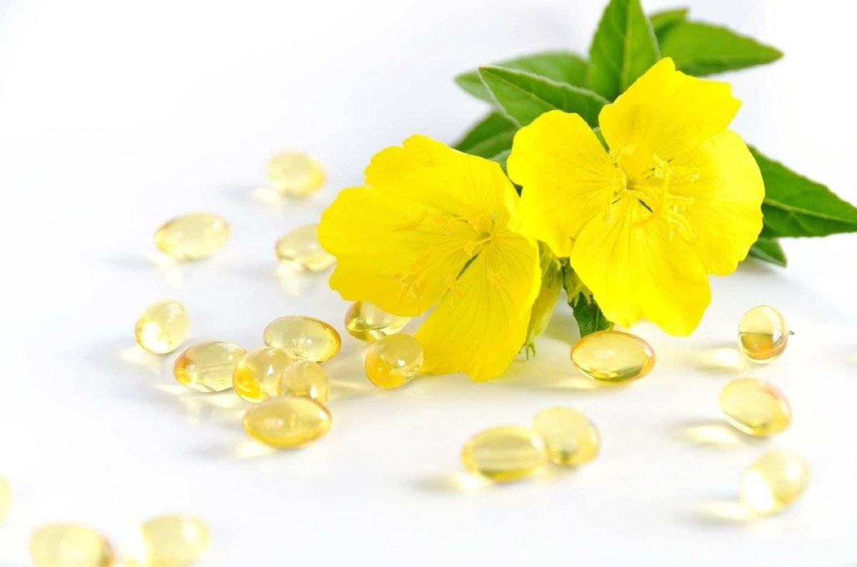Примула вечерняя. лечебные свойства для женщин, масло, трава, капсулы в гинекологии, противопоказания