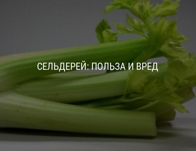 """""""польза и вред сельдерея для здоровья человека + вкусные рецепты"""""""