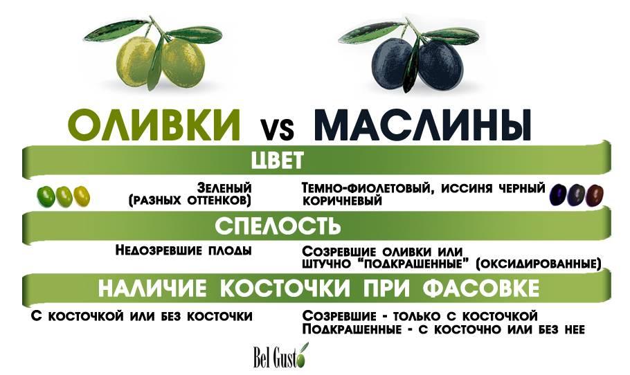 Консервированные оливки — польза и вред для организма