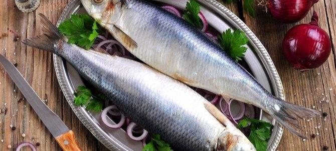 Сельдь – польза, химический состав и калорийность