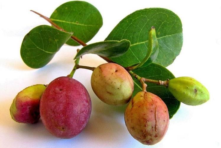 Карамбола польза и вред что это за фрукт как его едят