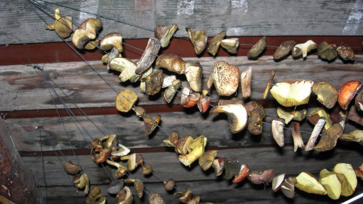 Как правильно сушить белые грибы в домашних условиях