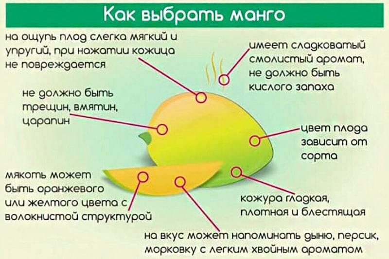 Полезные свойства манго для организма человека