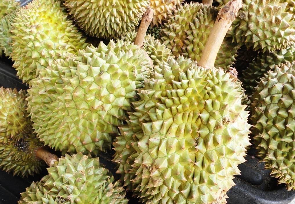 Польза дуриана: описание фрукта, особенности, противопоказания и применение дуриана (105 фото)