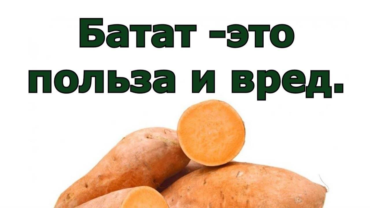 Батат: вкус, польза и вред сладкого картофеля
