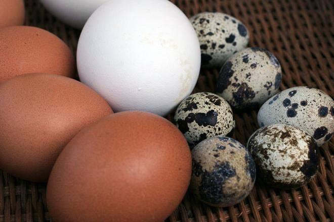 Как проверить яйца на свежесть в домашних условиях - популярные народные способы