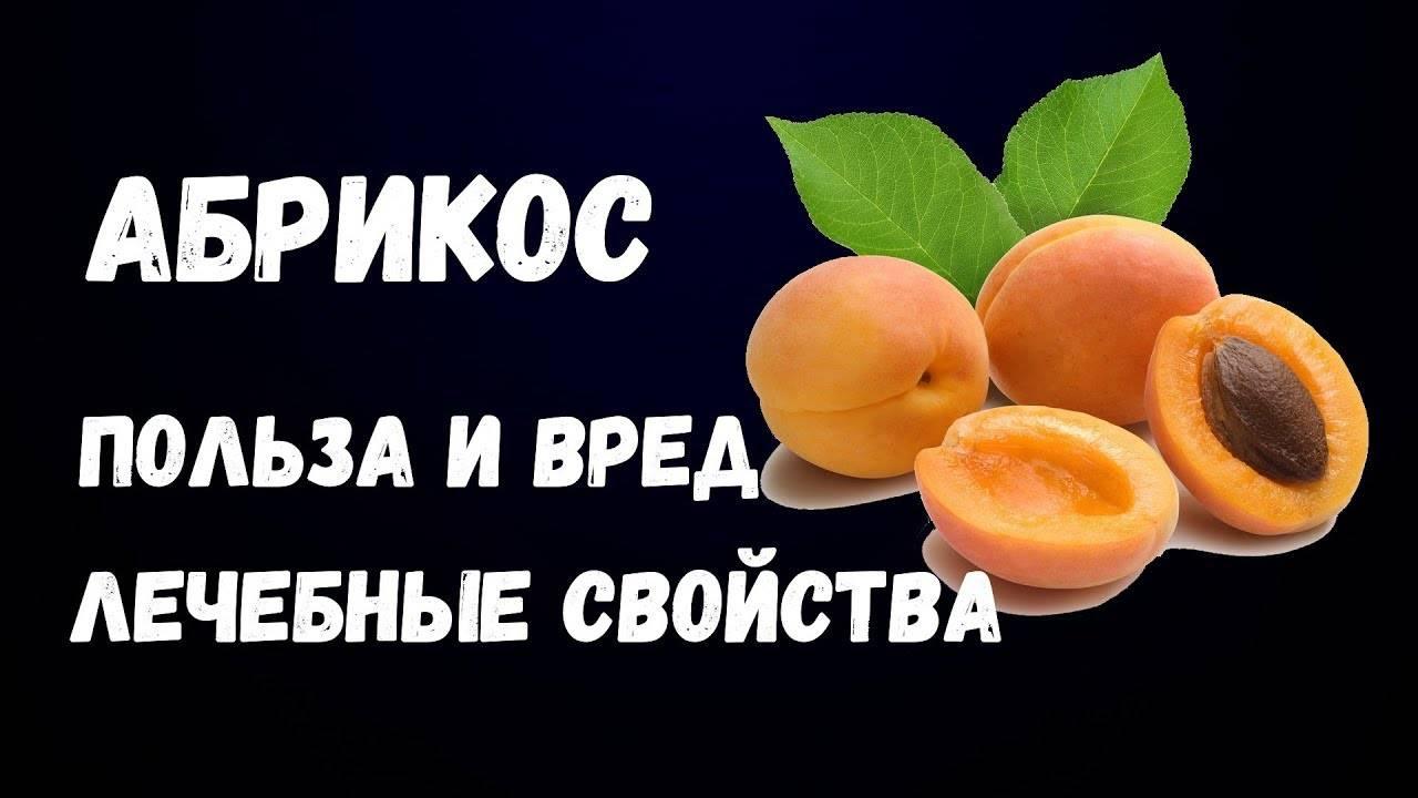 Польза абрикосов для организма