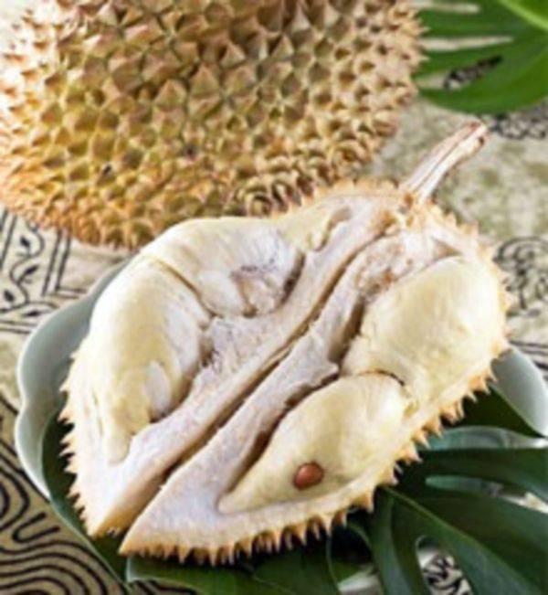 Польза и вред дуриана для здоровья