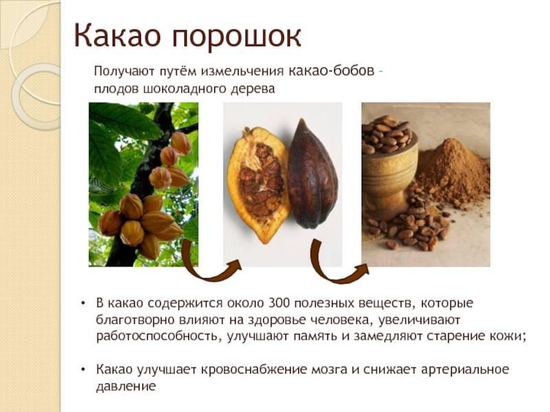 Польза масла какао