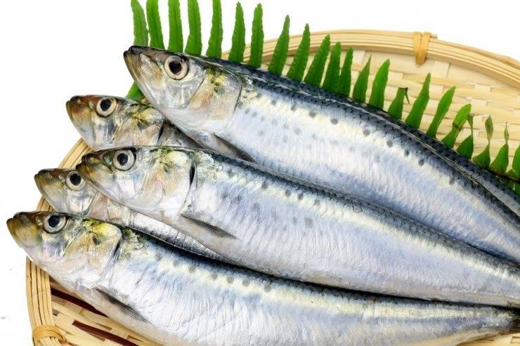 Сардина жирная рыба или нет. сардина: польза и вред, калорийность, пищевая ценность. свежие или консервированные