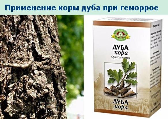 Лечебные свойства коры дуба и инструкция по применению
