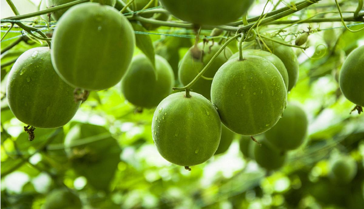 Описание чая «нахальный фрукт» – ароматного плодово-ягодного микса