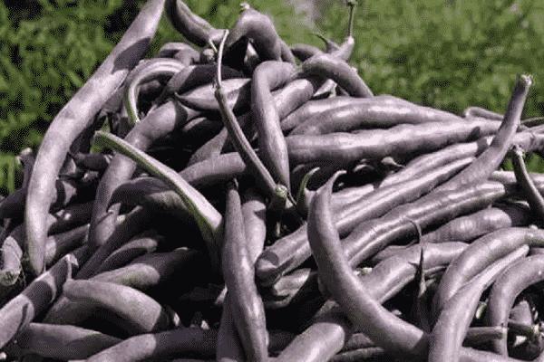 Фасоль - польза и вред