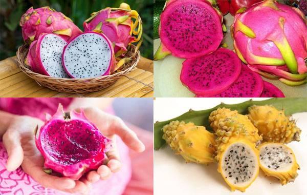 Питахайя – полезные свойства драконьего фрукта, как растить и кушать