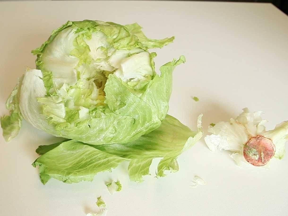 Польза и вред салата айсберг для здоровья
