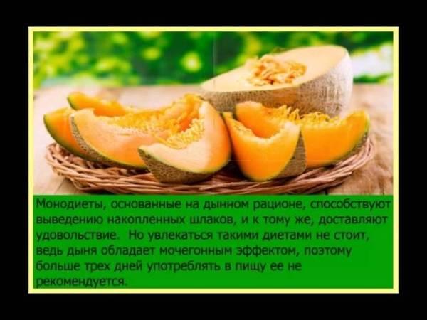 Дыня, польза и вред для здоровья человека