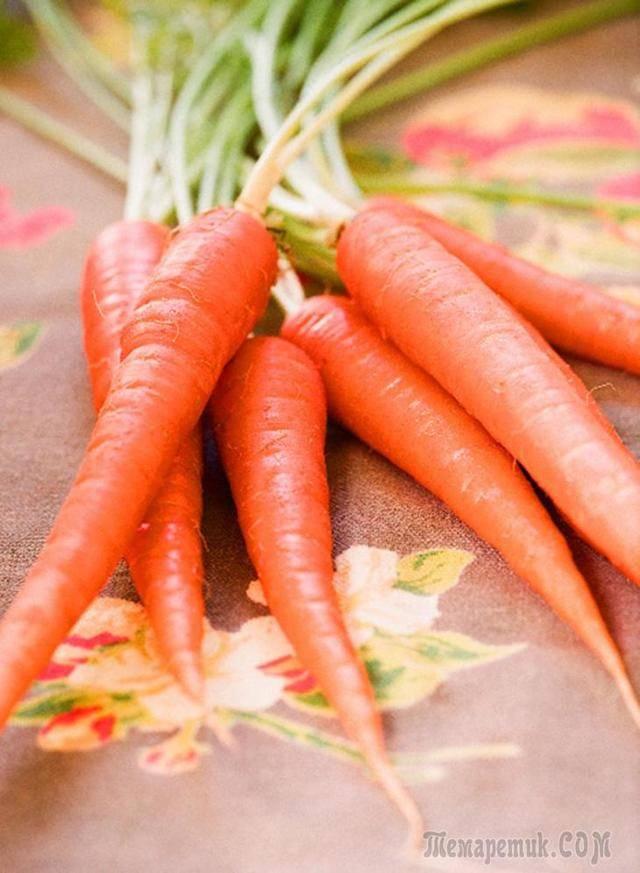 Морковь — полезные свойства, или как морковь стала фруктом