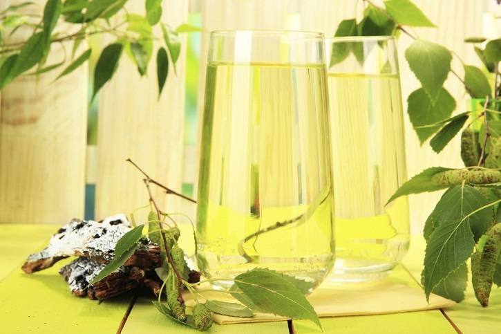 Березовый сок: польза и вред для организма, калорийность и рекомендации