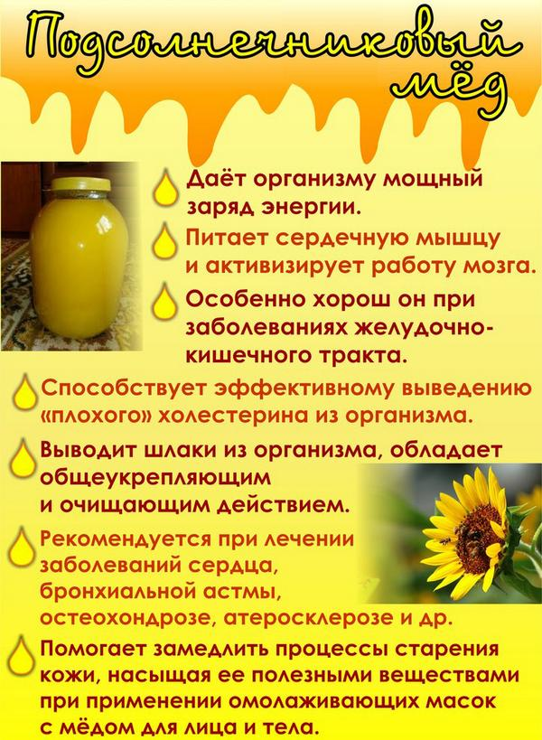 Натуральный лечебный продукт из меда подсолнечника, полезные свойства и противопоказания нектара