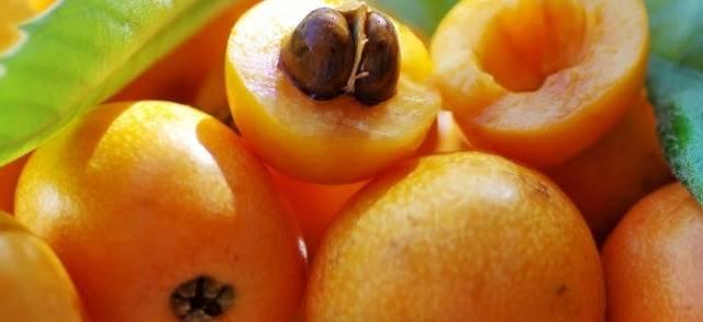 Полезные свойства и противопоказания мушмулы